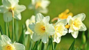 Read more about the article La Pasqua enuncia la bellezza, la rara bellezza di una nuova rinascita.