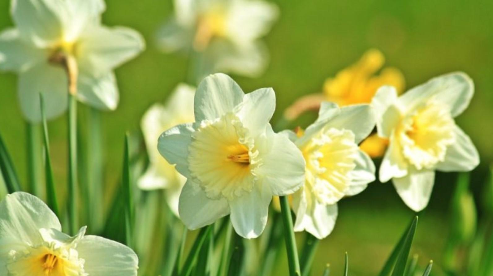 La Pasqua enuncia la bellezza, la rara bellezza di una nuova rinascita.